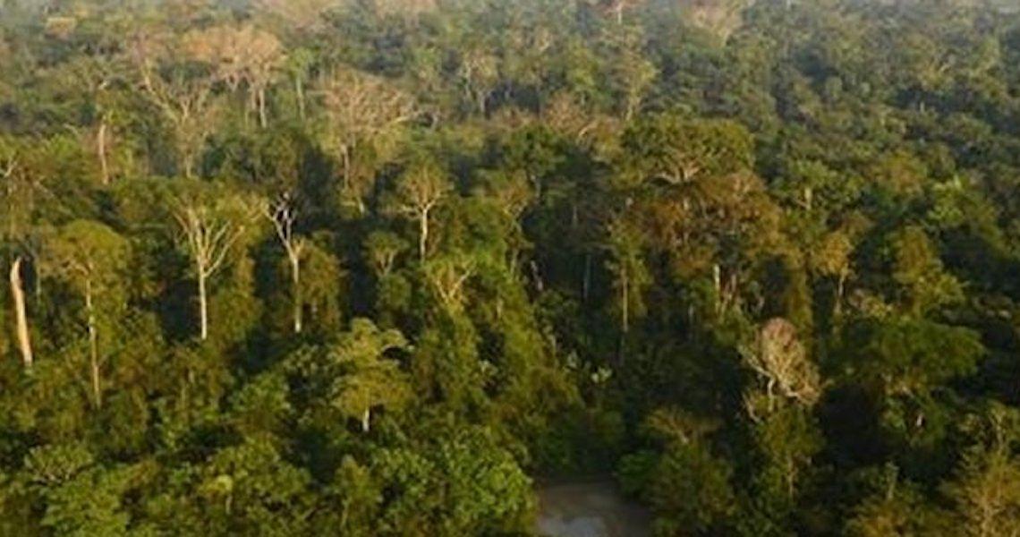 Bioeconomia é melhor aposta para modelo de desenvolvimento da Amazônia, segundo think tank