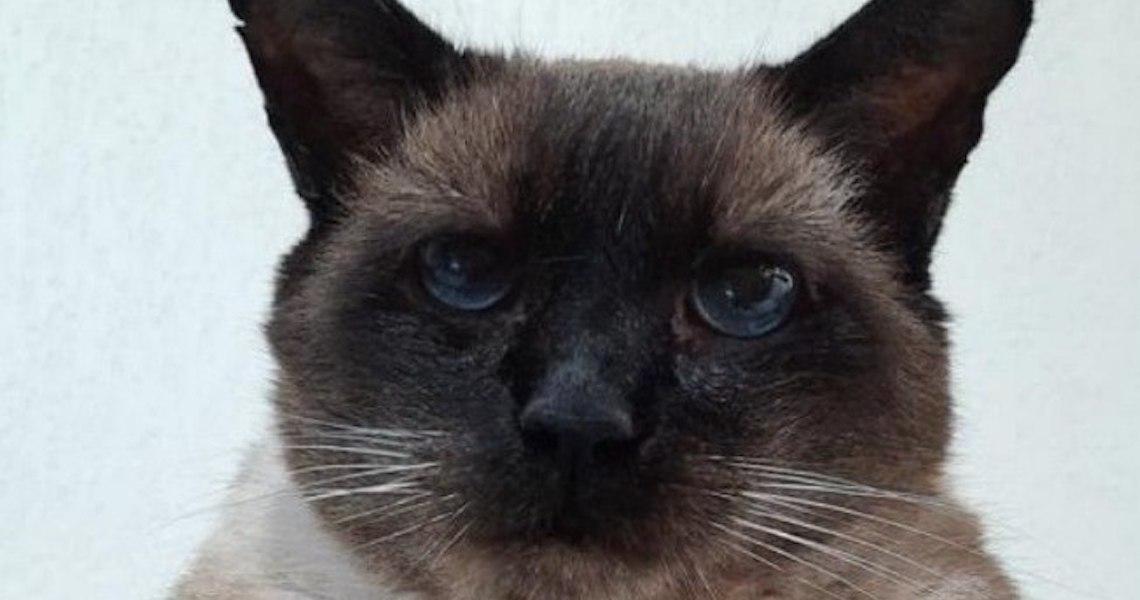 Gatinho, que luta contra AIDS felina, completa 21 anos e encanta web