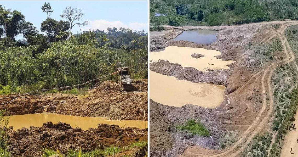 Secom comemora queda de alertas de desmatamentos e leva invertida nas redes: 'é cúmplice de garimpeiros ilegais'