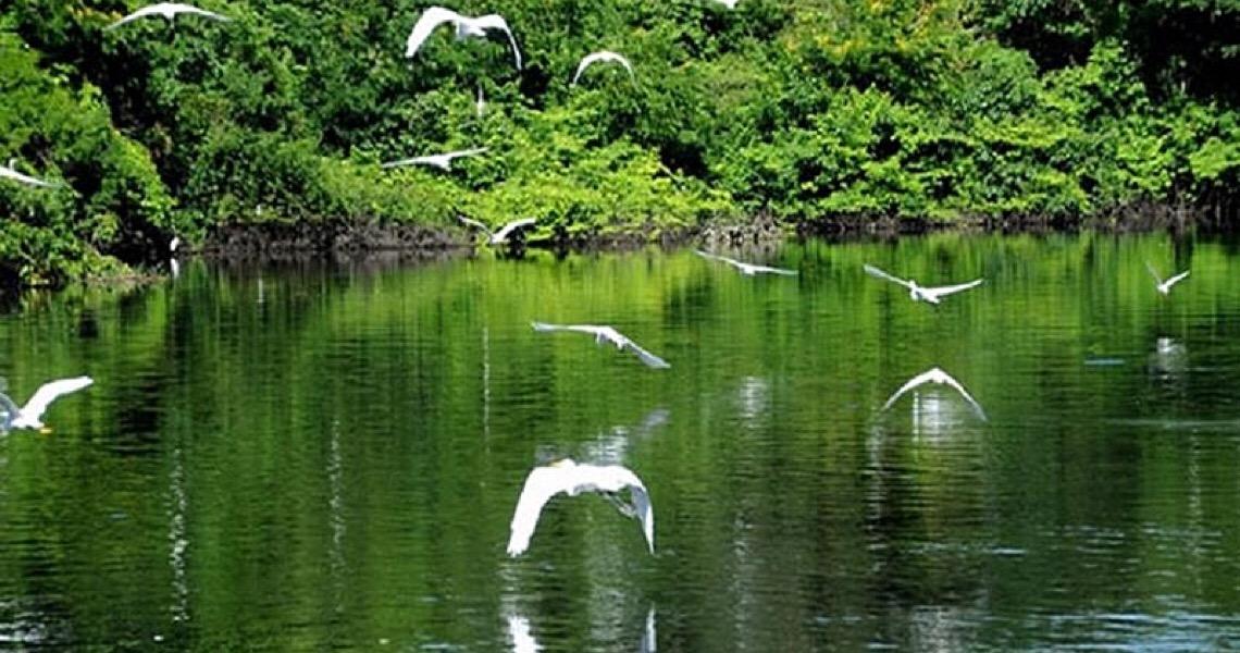 Carrefour adota parque na Amazônia, mas financia desmatamento em suas cadeias