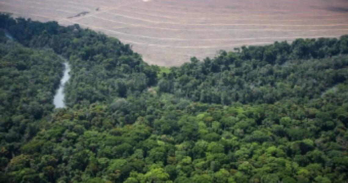 Banco francês suspende crédito para empresas ligadas a desmatamento