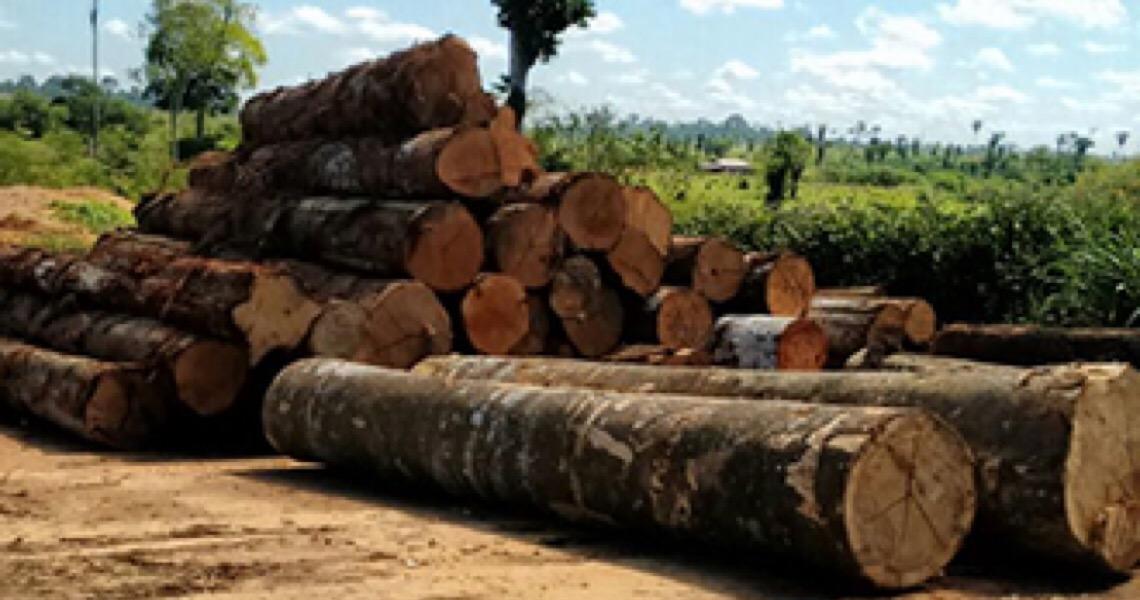 Mantida prisão de acusado de chefiar organização criminosa voltada à exploração ilegal de madeira