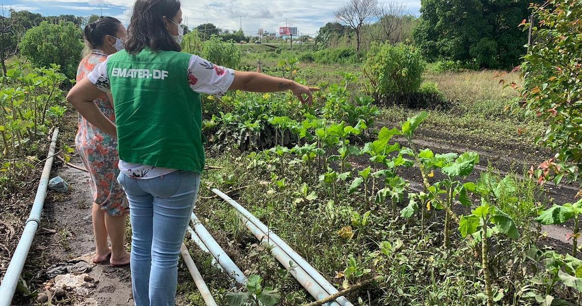 Emater-DF articula ajuda a produtores afetados por chuva