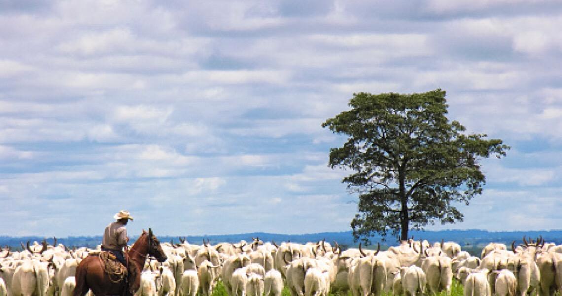 Ovelha perde 35 kg de lã após 1ª tosa em 5 anos