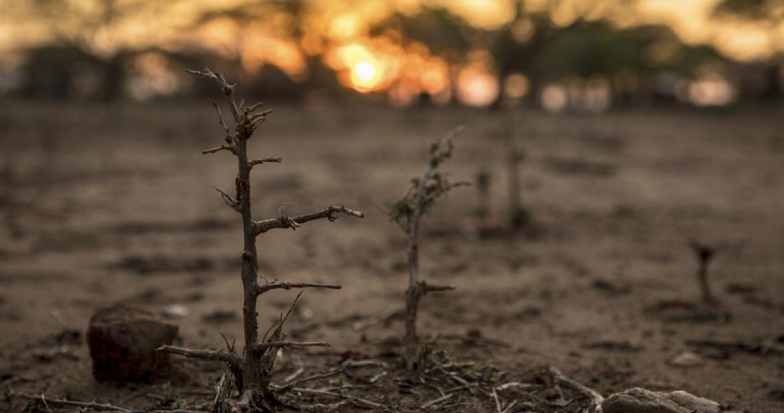 """Guterres diz que novo relatório da ONU é """"alerta vermelho"""" para o planeta"""