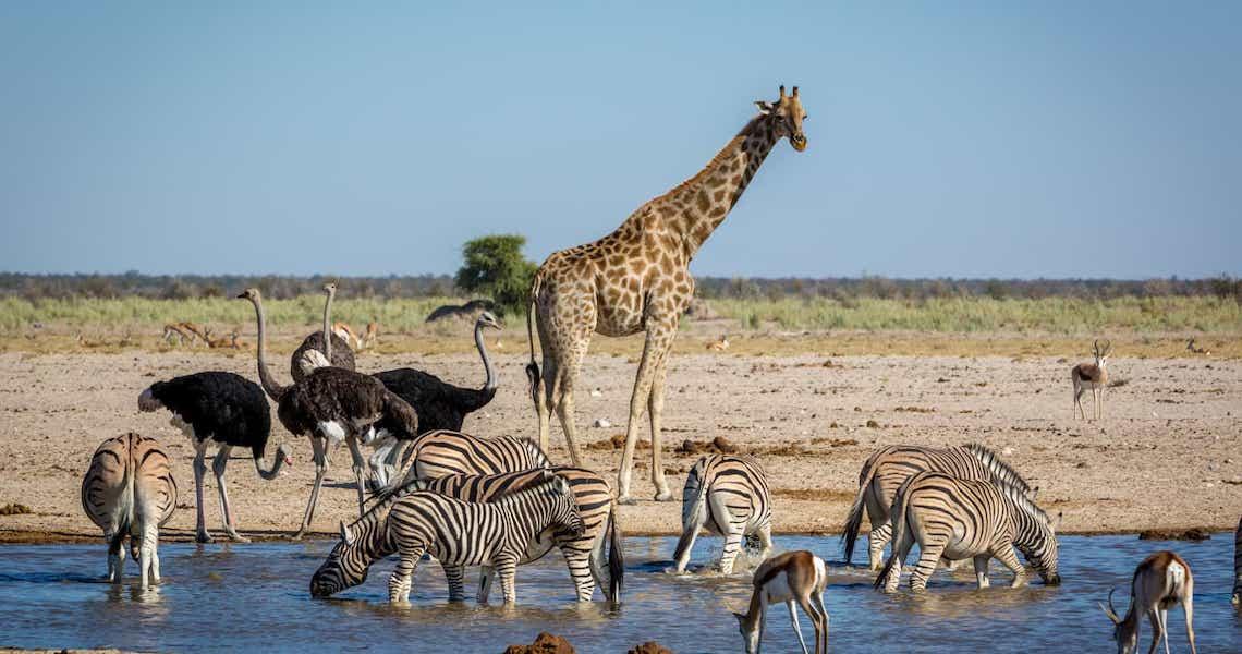 Dia Mundial da Vida Selvagem ressalta conservação de recursos florestais