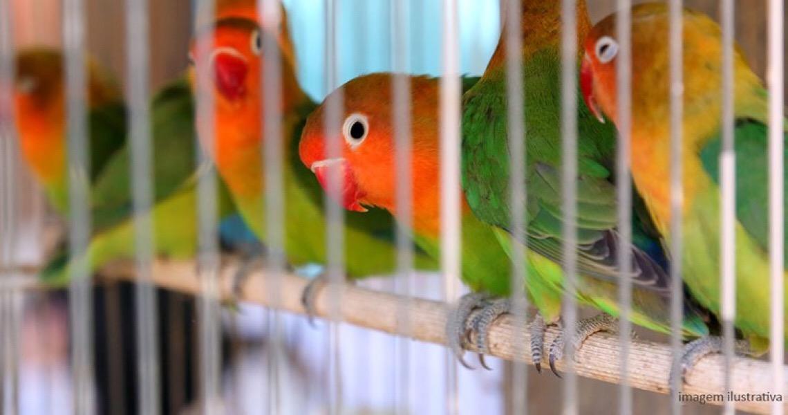 Justiça mantém auto de infração por criação de ave silvestre em cativeiro