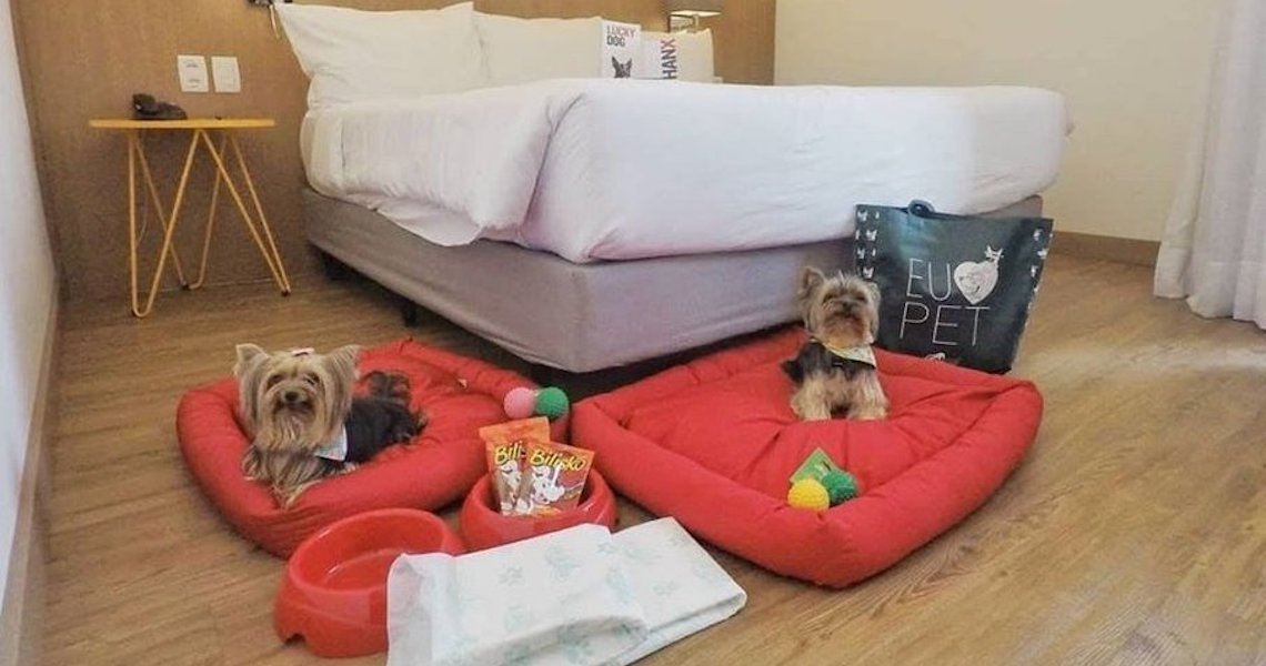 Hospedagem Pet Friendly: escolha um bom hotel para ficar com seu pet