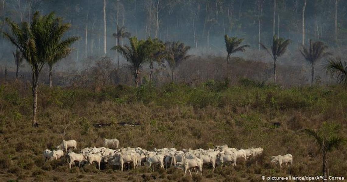 Indígenas processam rede francesa por desmatamento na Amazônia