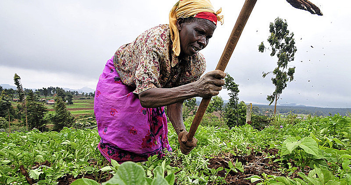 Guardiãs de sementes: ancestralidade camponesa preserva vida sustentável no planeta