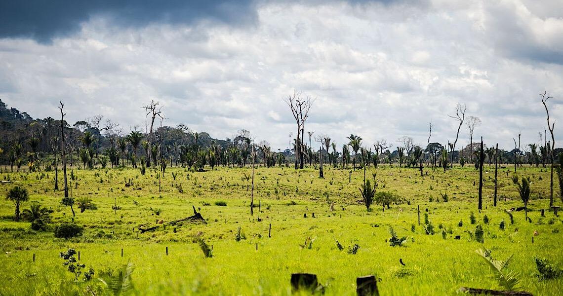 PF deflagra operação contra crimes ambientais na divisa entre AC e AM