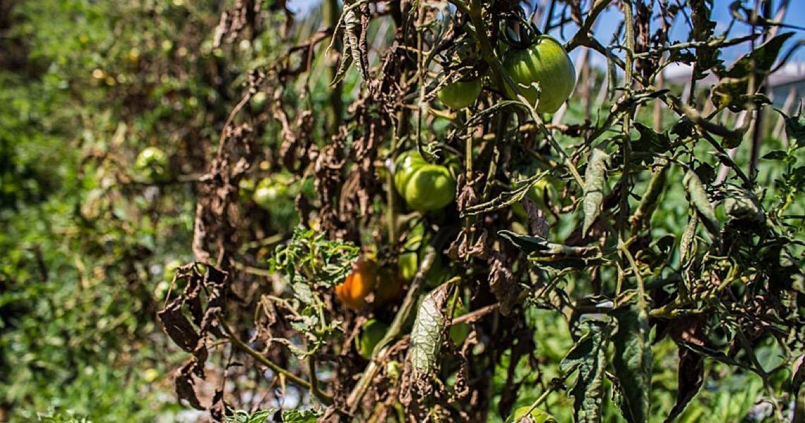 Assentamento do MST que produz orgânicos ganha liminar contra uso de agrotóxicos