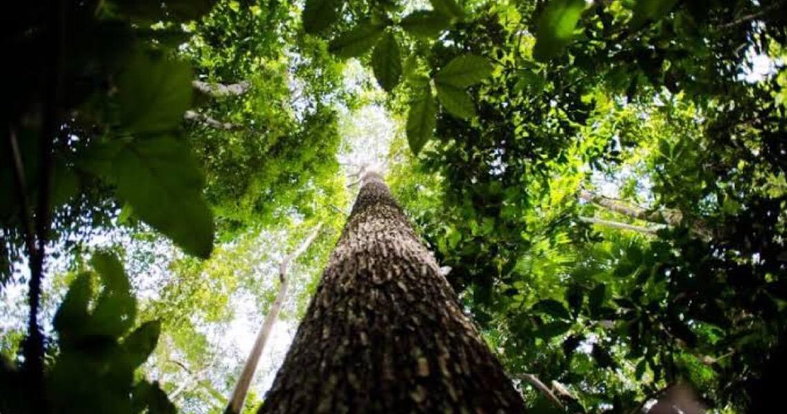 Ex-ministros da Fazenda e líderes do agro pedem recomposição do orçamento do Meio Ambiente