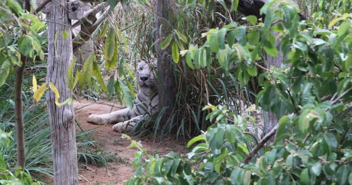 Justiça do DF nega liminar contra decisão que manteve funcionamento do Zoológico durante a pandemia