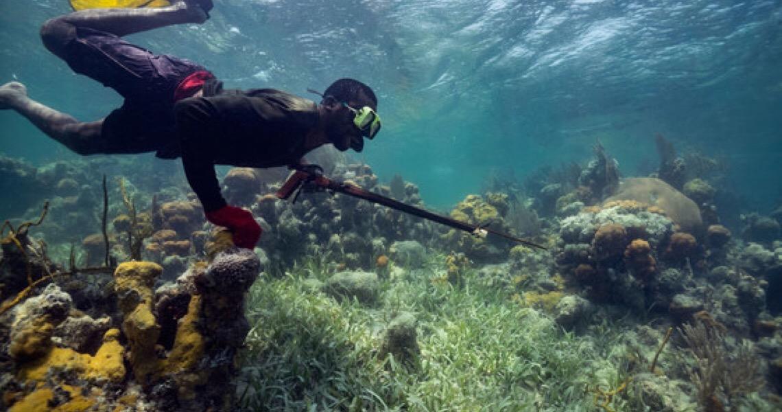 Novos subsídios apoiam conservação e restauração de habitats marinhos