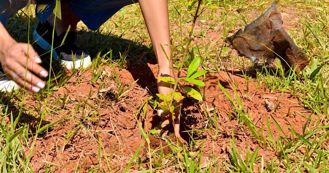 Bosque Rosa, no Parque da Cidade Dona Sarah homenageia o mês das mulheres