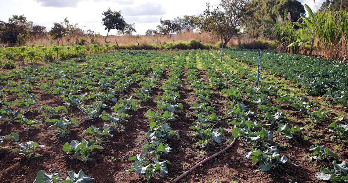 Área agrícola no DF aumenta 22,68% no período de 18 anos