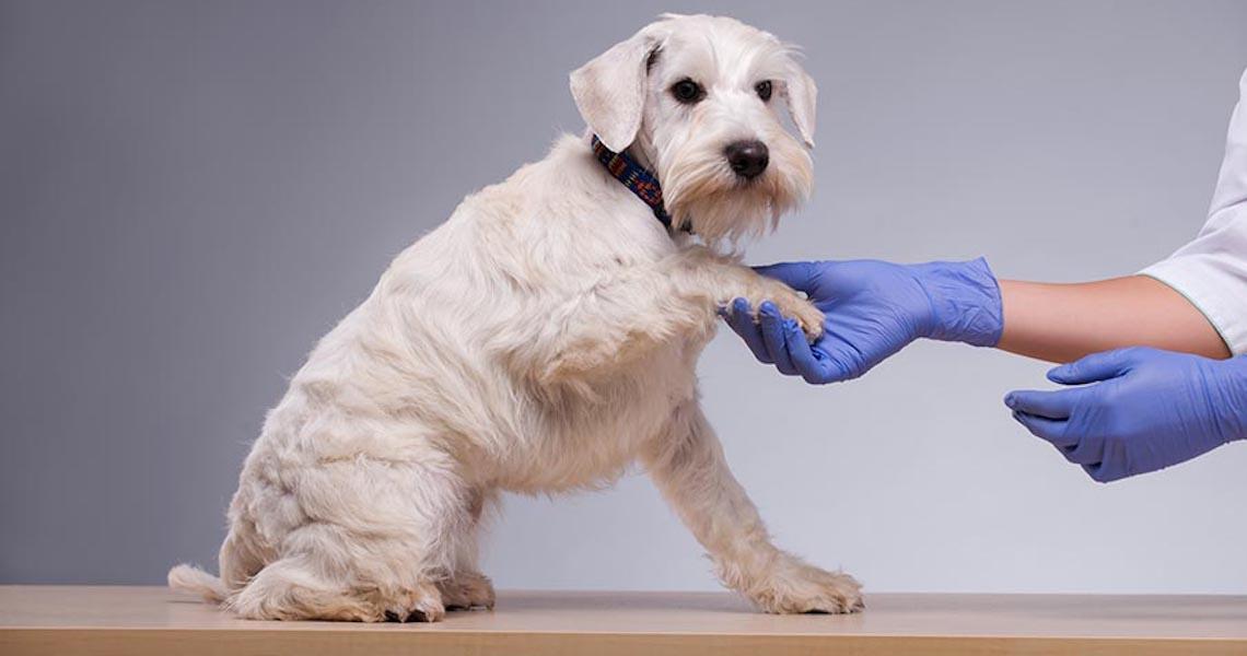 Startup para cachorros