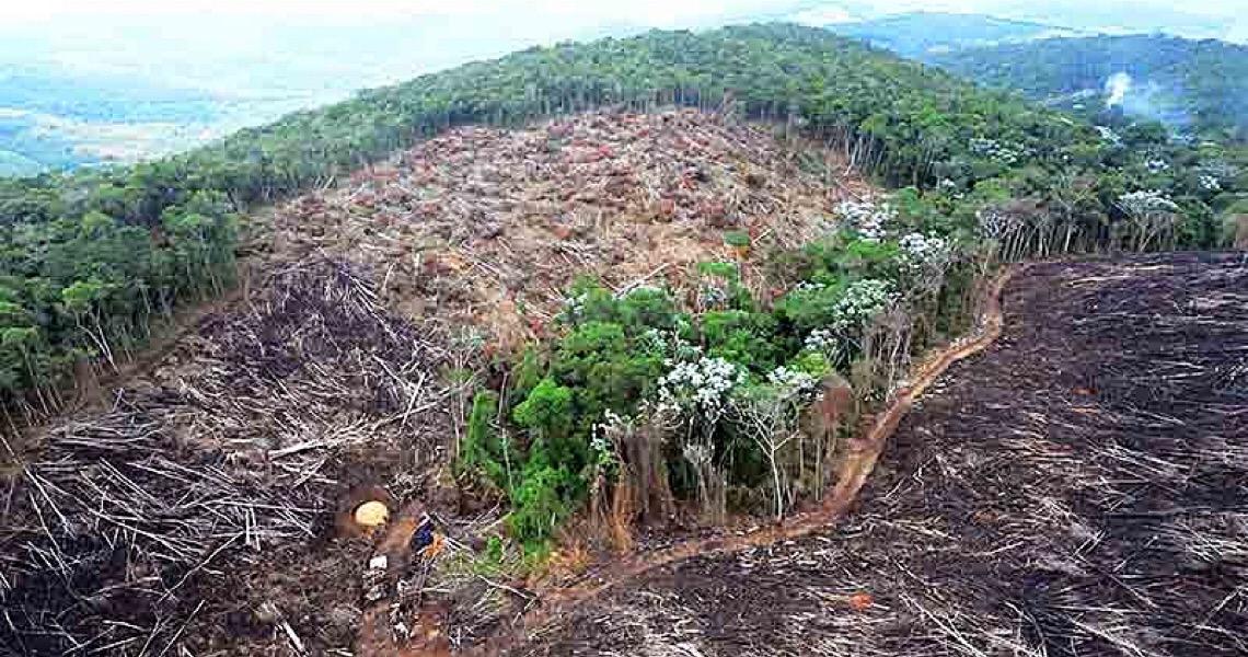 A salvação da Amazônia passa pela China e pelos Estados Unidos