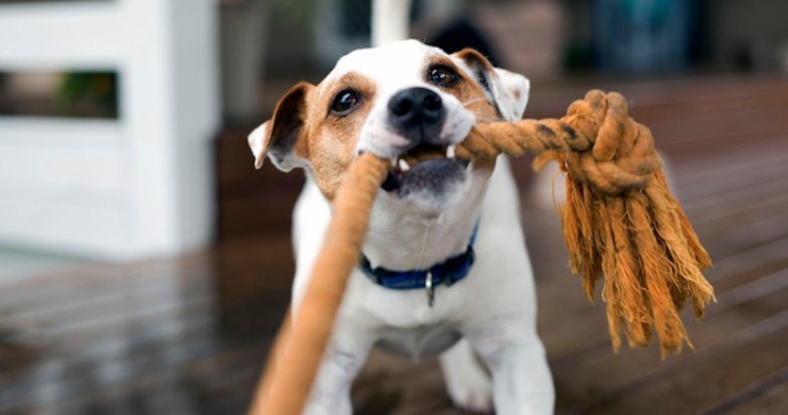 Como cuidar da saúde e da diversão dos pets na pandemia