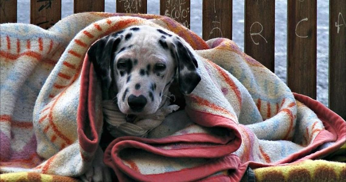 Cuidado redobrado no outono para tosse dos canis