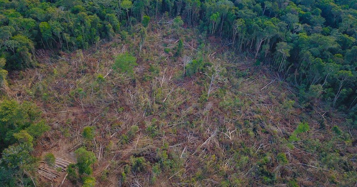 Desmatamento na Amazônia bate recorde histórico em março