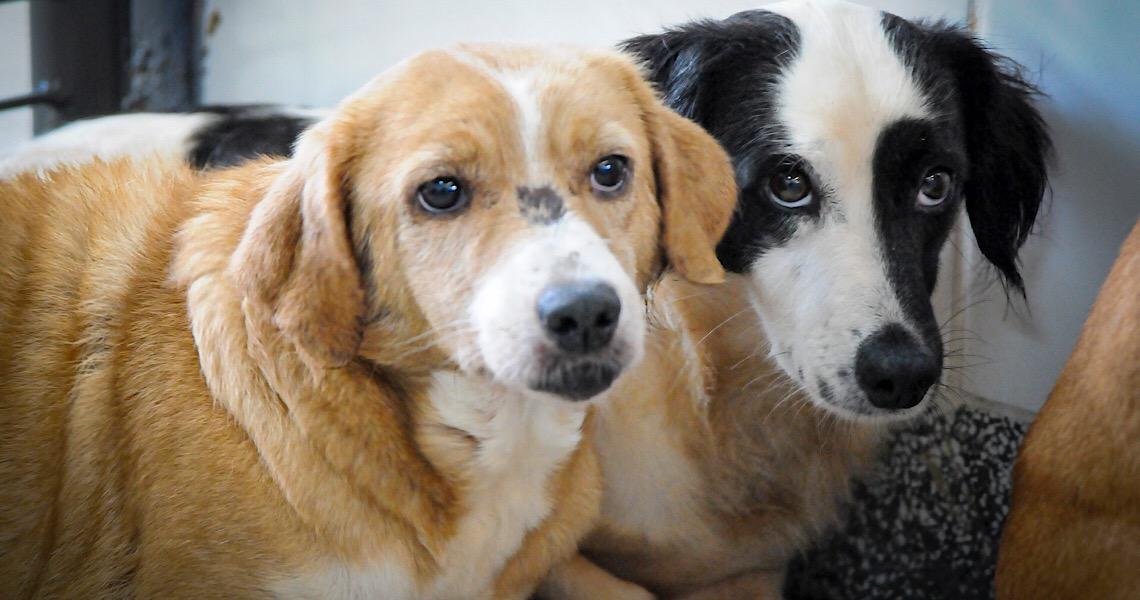 Cães e gatos estão aptos para adoção na Zoonoses