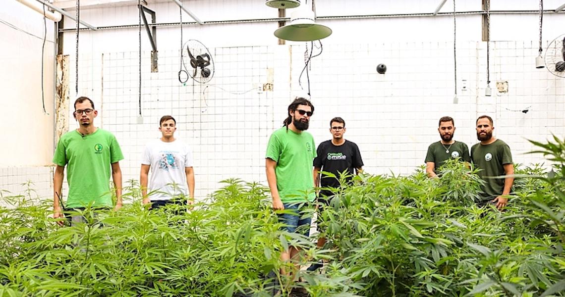 Alvos da Anvisa, associações de cultivadores democratizam acesso à cannabis medicinal