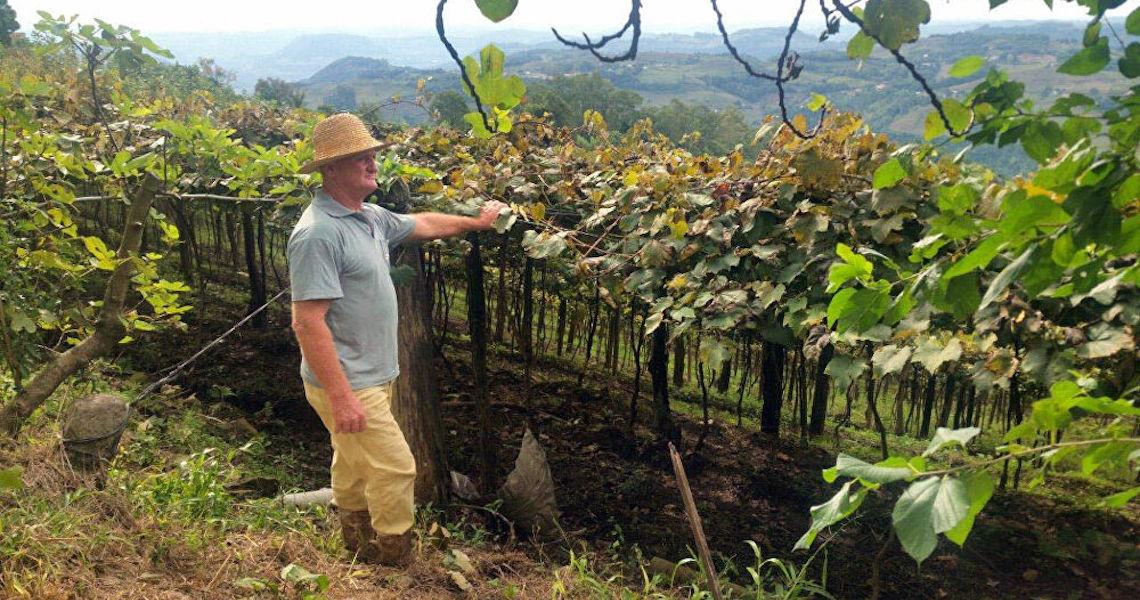Agricultura familiar em cada uma das 5 regiões do Brasil: Confira histórias de sucesso e desafios