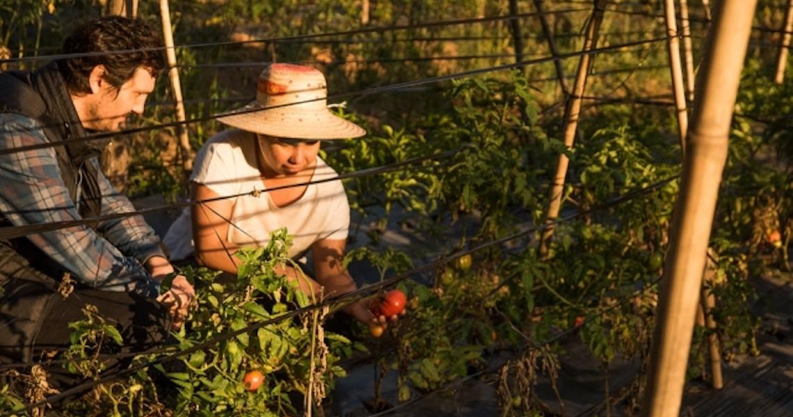 Cultivo sob medida: Chefs buscam parcerias com produtores rurais