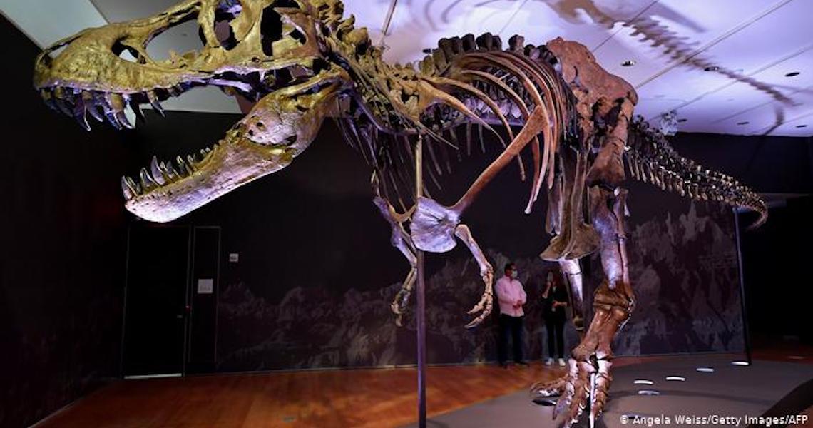Estudo sugere que 2,5 bilhões de tiranossauros rex viveram na Terra