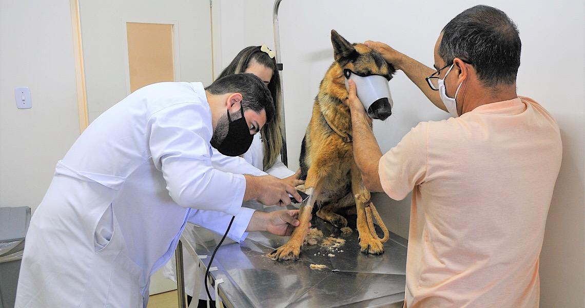 Mais de 58 mil animais atendidos pelo Hospital Veterinário de Brasília em três anos
