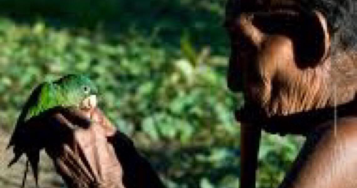 No Dia do Índio, Funai comemora agronegócio nas aldeias