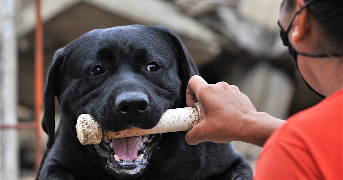 Conheça Baruk e Delta, cães de missão e salvamento do Corpo de Bombeiros