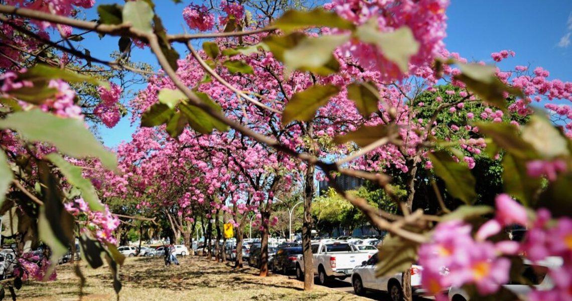 Calendário de flores e cores é cultivado no Distrito Federal