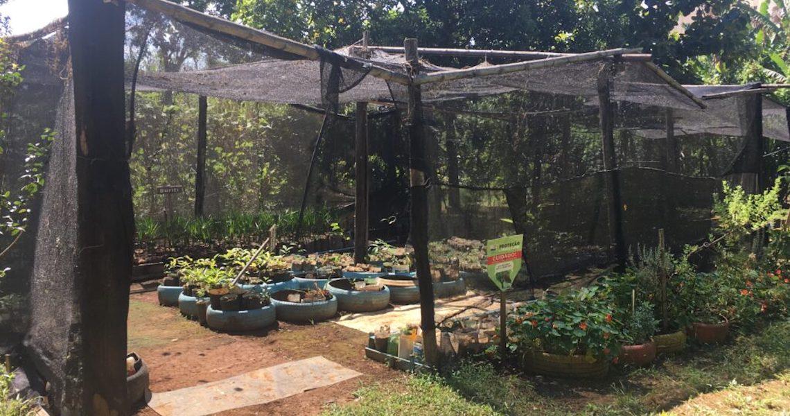 Parque Águas Claras atinge produção de 35 mil mudas por ano