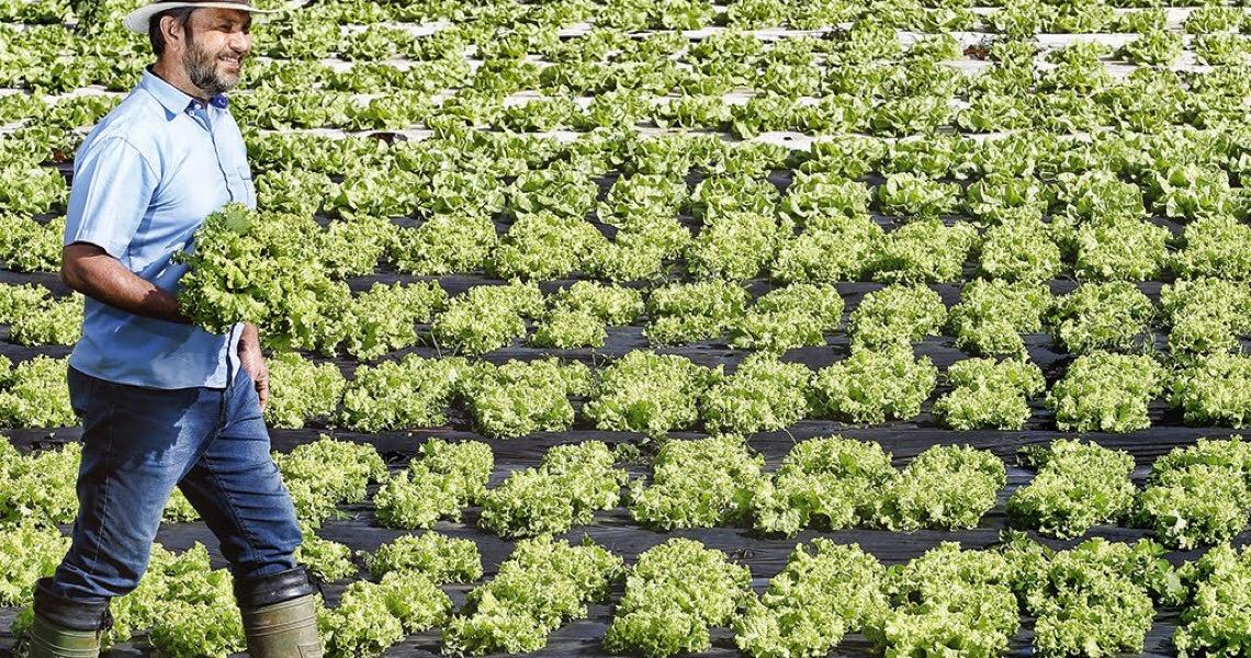Como o agronegócio brasileiro irá se reinventar nos próximos dez anos