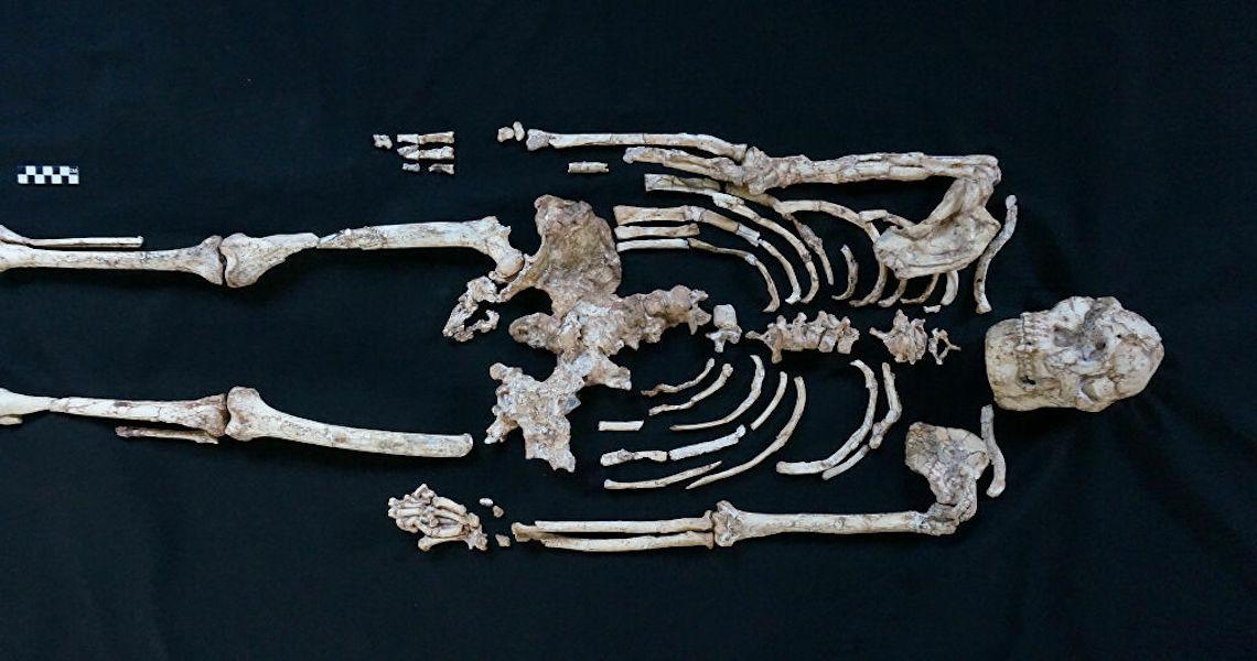 Pé Pequeno: Esqueleto de antigo parente humano revela que ancestrais se balançavam em árvores