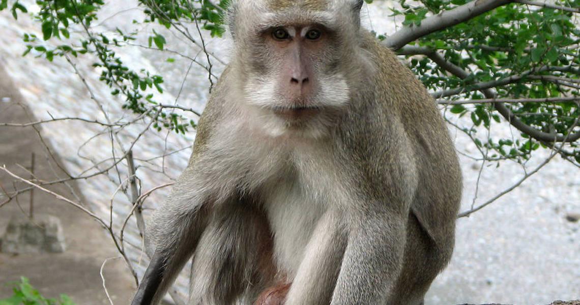 Cientistas desenvolvem, pela primeira vez, embrião híbrido de macacos com humanos