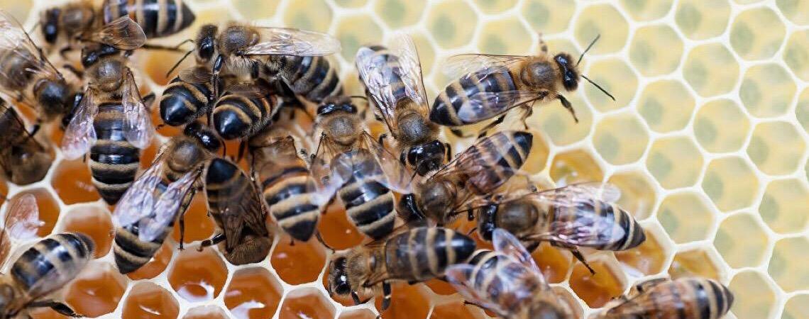 Medidas antidumping dos EUA podem inviabilizar exportações de mel do Brasil, opina especialista
