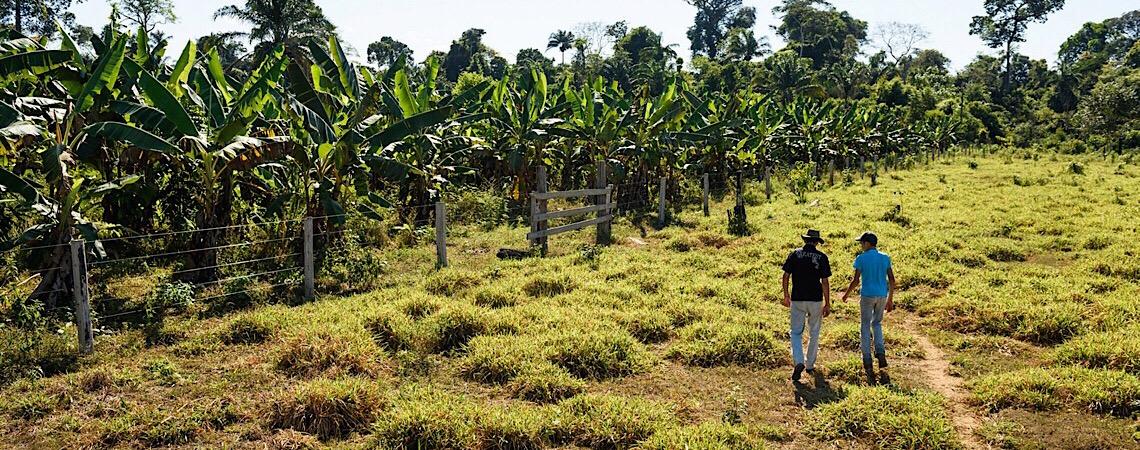 Pará vai dar 'selo verde' para pecuarista que criar gado em área sem desmatamento