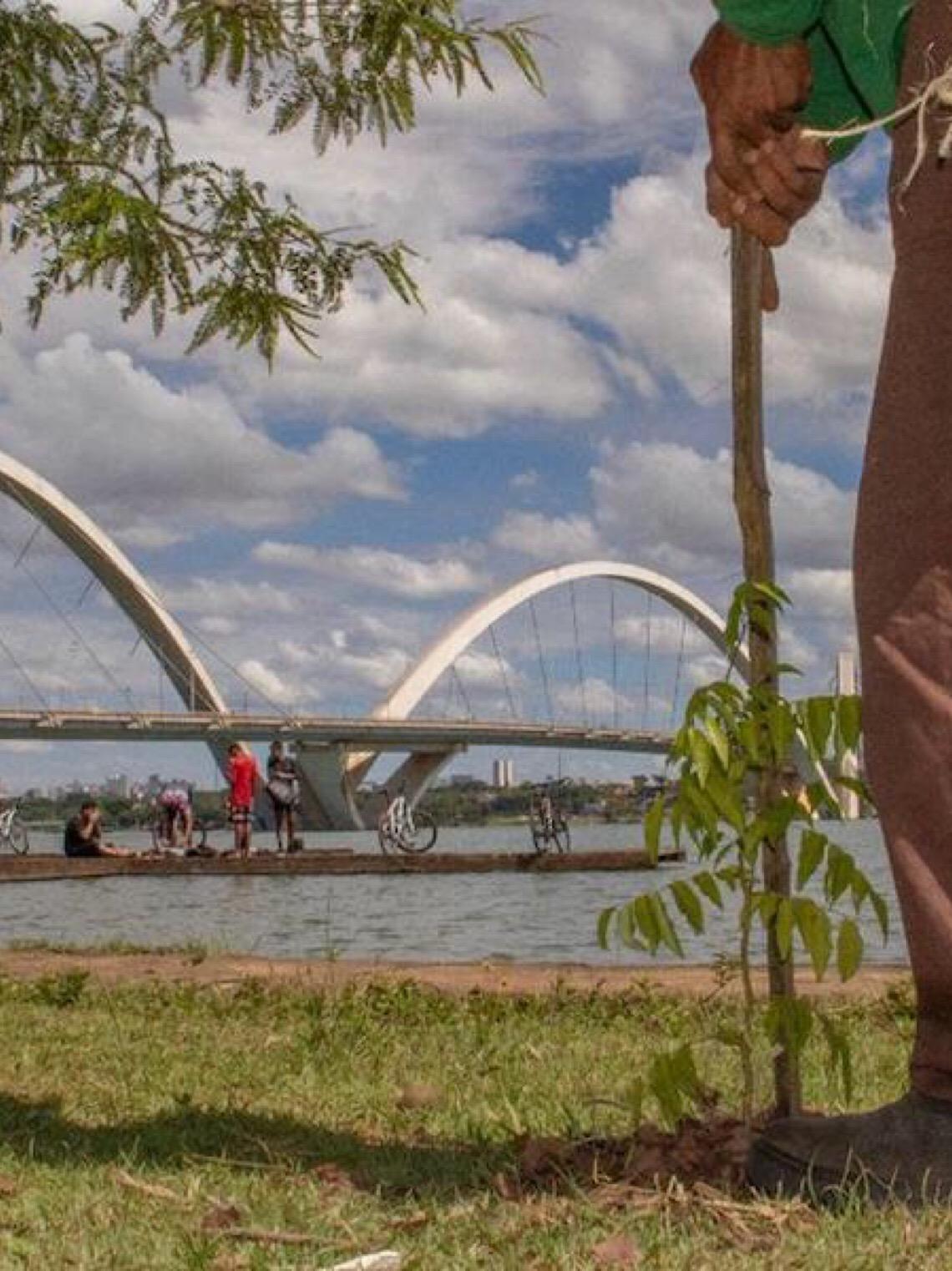 Orla do Paranoá: Plantio de mudas de ipês vai embelezar o Lago Sul