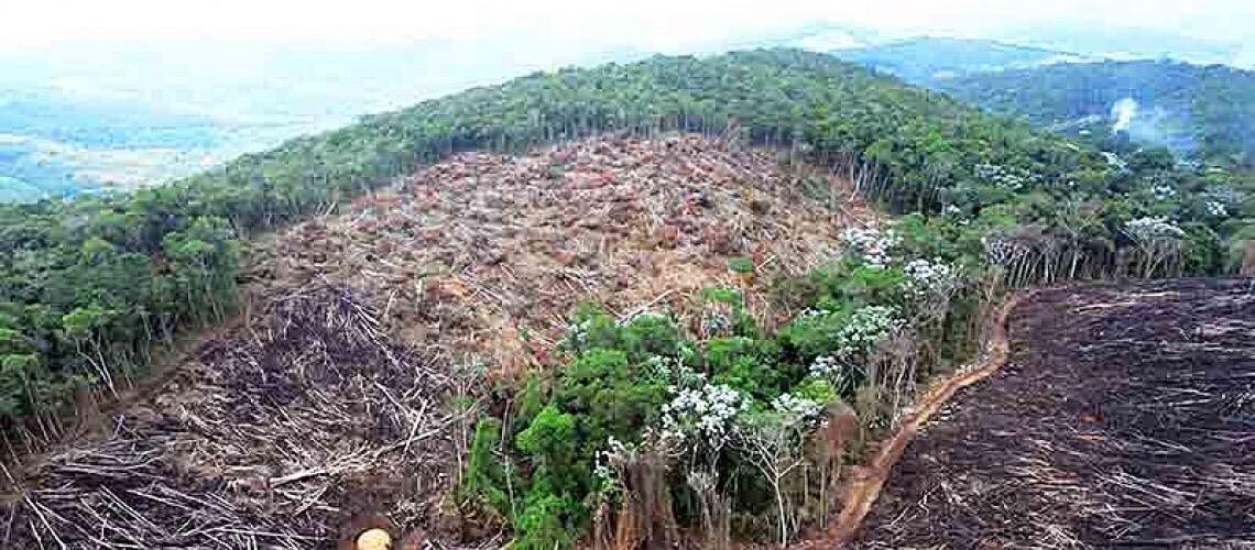 Dados de desmatamento de órgão do próprio governo desmentem discurso de Bolsonaro