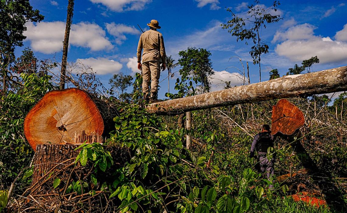 Em abril foi registrado novo recorde de desmatamento na Amazônia, alerta o Greenpeace