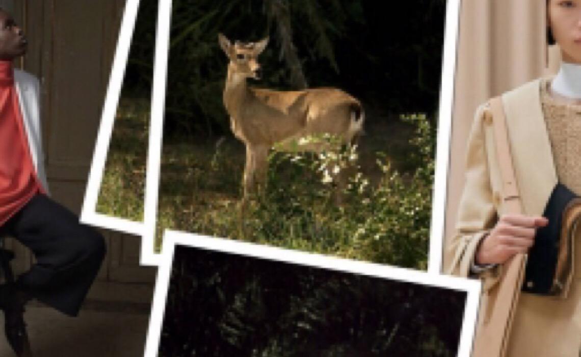 Fauna do Pantanal inspira comparações inusitadas com coleções estrangeira