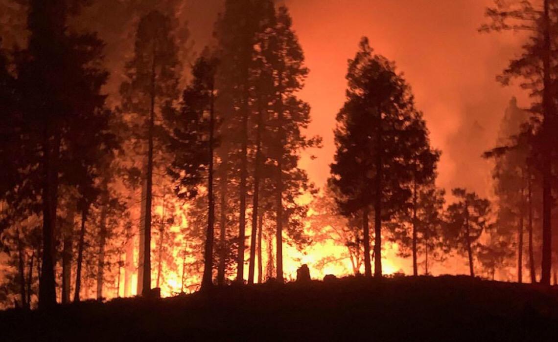 ONU cita projeto florestal em Portugal como exemplo de conservação