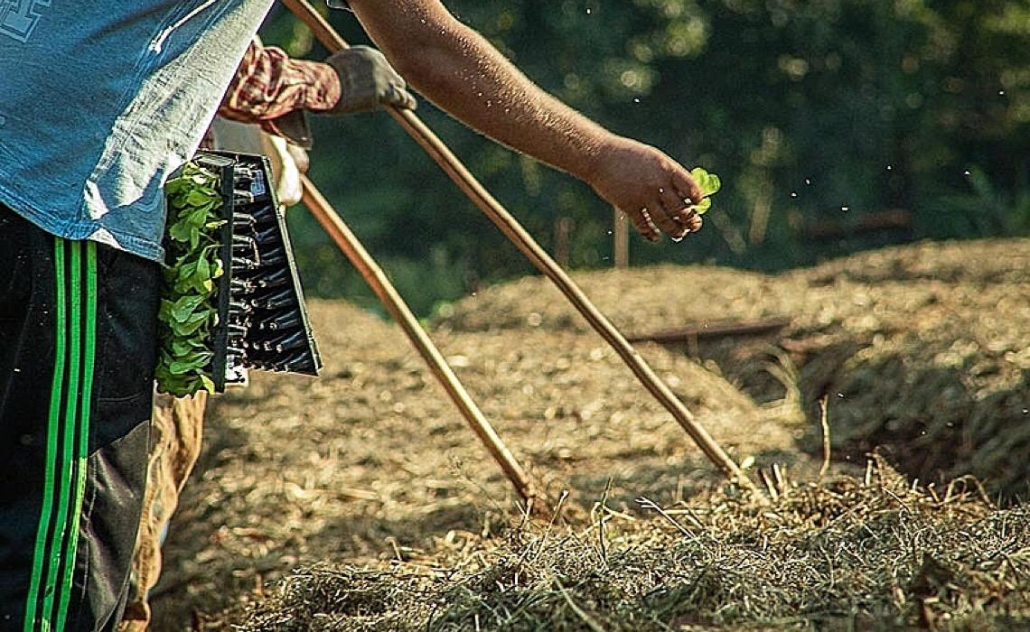 No Paraná, estiagem e pandemia ameaçam produção de alimentos da agricultura familiar