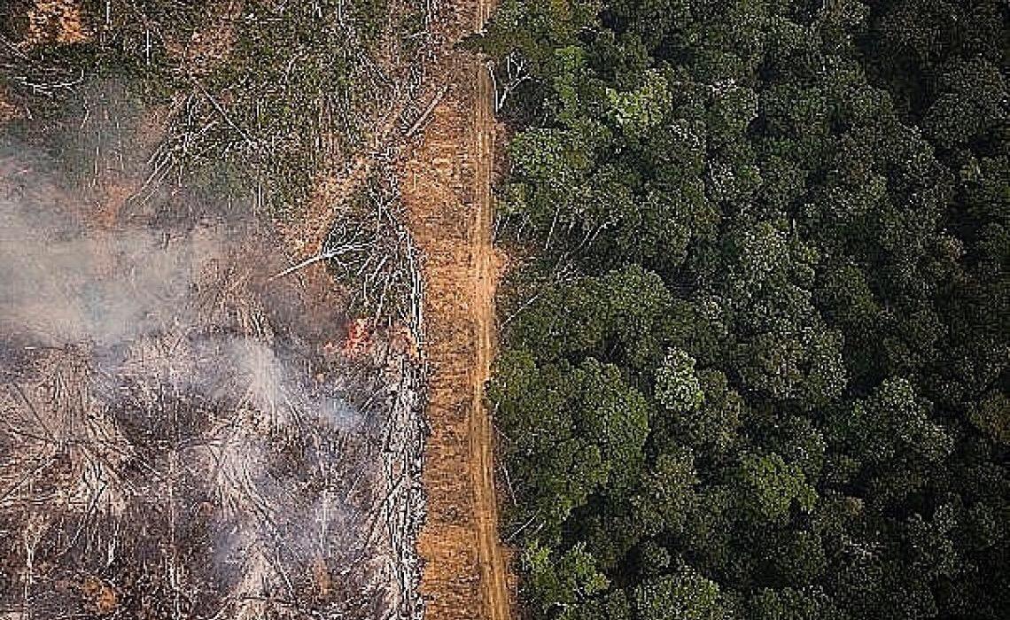 Organizações ambientais repudiam aprovação de PL do