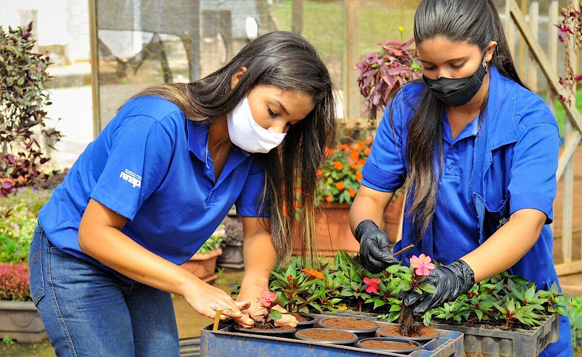 Jovens aprendizes atuam nos viveiros da Novacap
