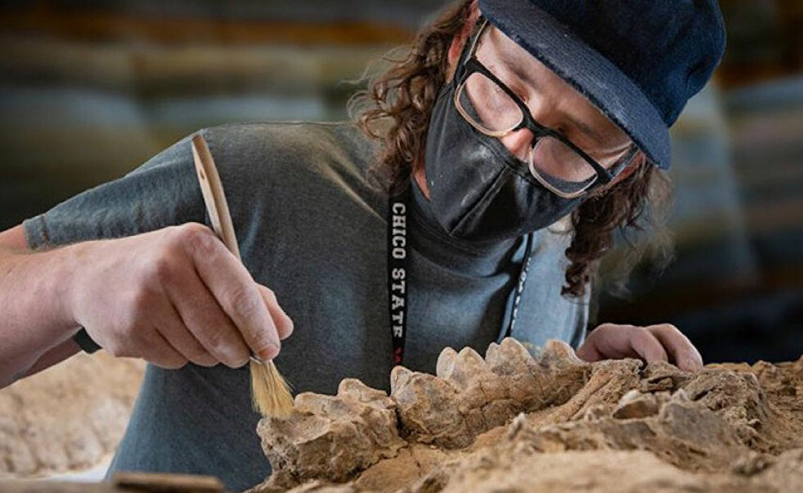Fósseis de animais e árvores gigantes são encontrados na Califórnia